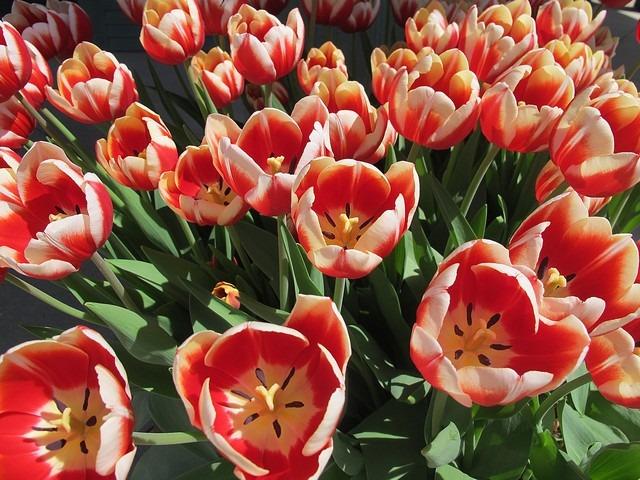 Spring Flowers, Ohio